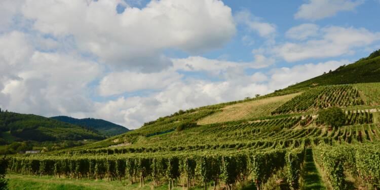 Vin d'Alsace : l'autorité de la concurrence sanctionne une entente pour le rendre plus cher