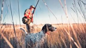 Permis de chasser : démarches et coût