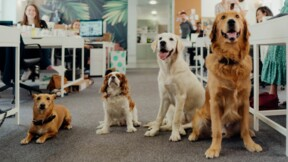 Les chiens, les meilleurs amis du bureau ?