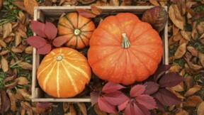 En Dordogne, un agriculteur produit une citrouille de 443 kilos