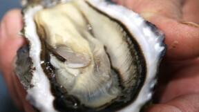 L'incroyable découverte d'un ostréiculteur breton