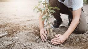 Réglementation en matière de plantations d'arbres