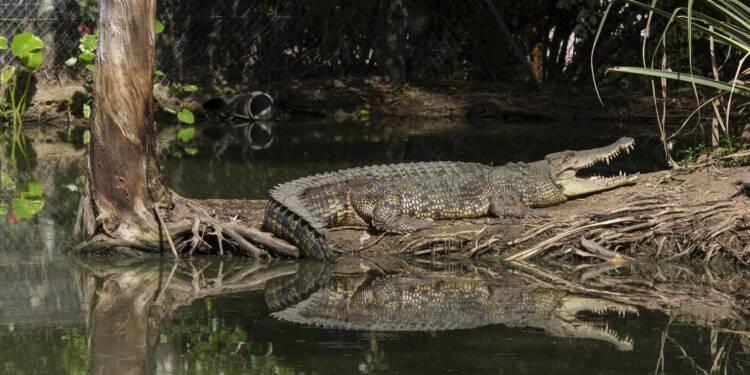 Hermès va construire la plus grande ferme de crocodiles d'Australie