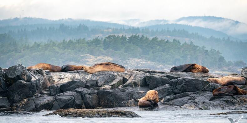 Une île canadienne au cœur d'une dispute à près de 2 millions de dollars