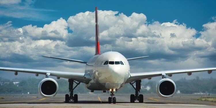 En Australie, les guêpes menacent les avions