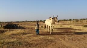 """Covid-19, violence """"paroxystique""""… l'Afrique de l'Ouest face à une crise alimentaire historique"""