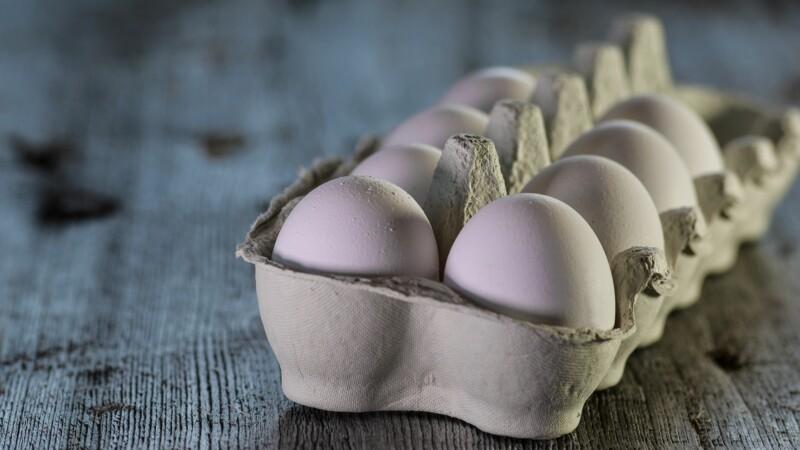 Ces poules normandes dont les œufs servent à fabriquer le vaccin contre la grippe