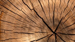 """Bourse : """"les actions du bois profiteront du boom de l'immobilier et du e-commerce"""""""