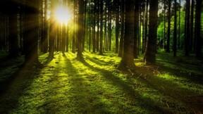 Les forêts, mieux que le Pinel pour défiscaliser ?