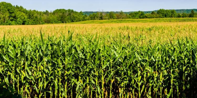 Une centaine d'OGM sont bien autorisés en France, en particulier dans l'alimentation humaine et animale
