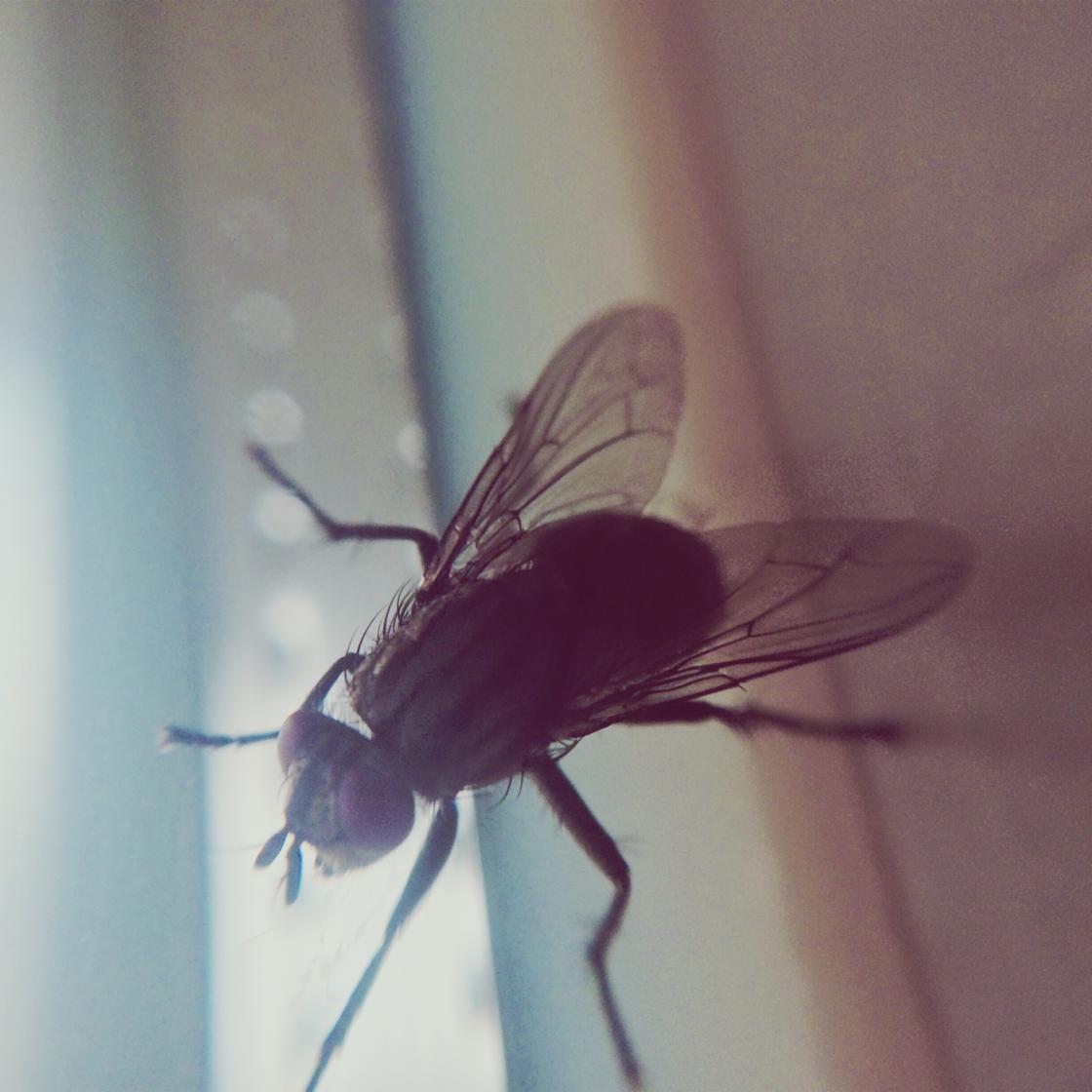 Fliegen im Sommer: Wenn du diesen Beutel auf den Balkon hängst