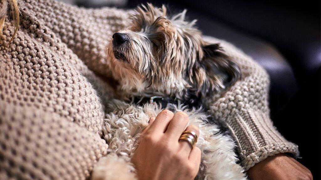 Bei schlechtem Wetter: So könnt ihr euren Hund zu Hause beschäftigen