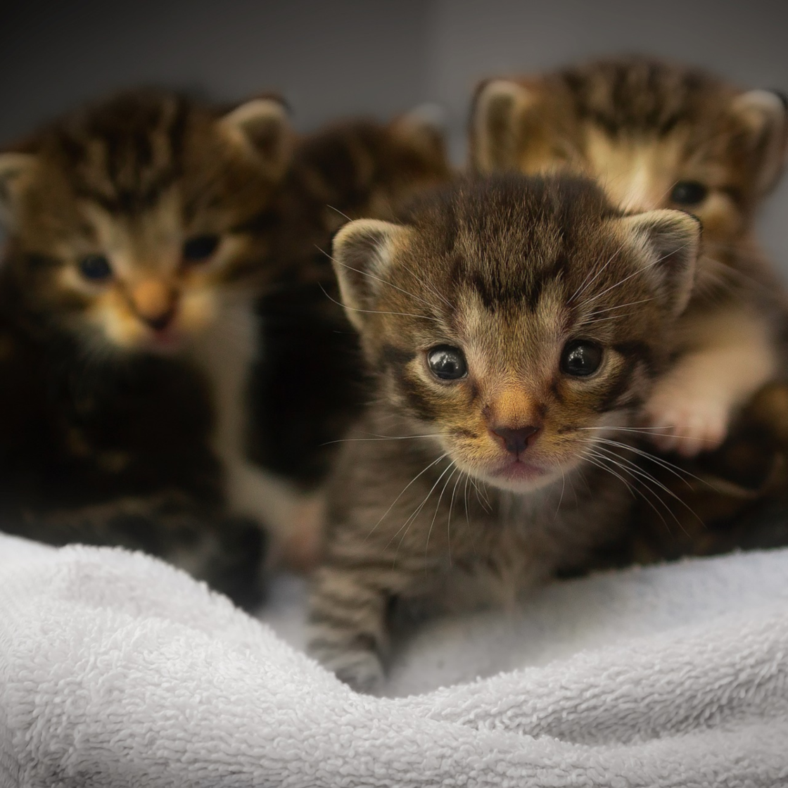 Frau will Hilfe suchen für verlassene Kitten: Dann folgt ihr eine Horde