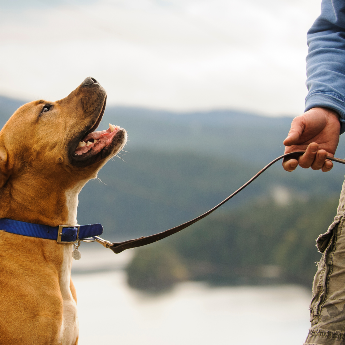 Chirurg warnt: Diesen Fehler machen viele Hundebesitzer beim Gassigehen