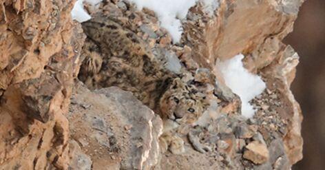 Casse-tête : un sublime léopard est caché dans cette photo, saurez-vous le trouver