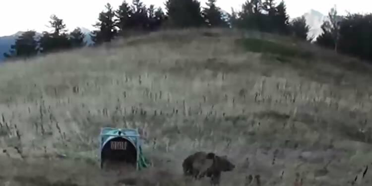 """Pyrénées: des anti-ours dans la montagne pour les """"effrayer"""""""