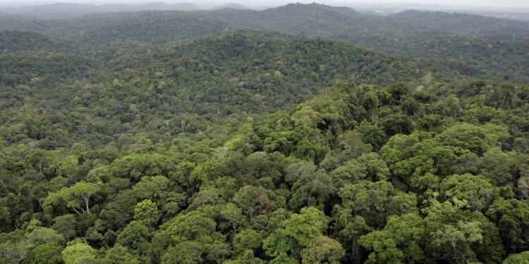 """Guyane: La Compagnie Montagne d'or """"plus que jamais"""" prête à échanger avec le gouvernement"""