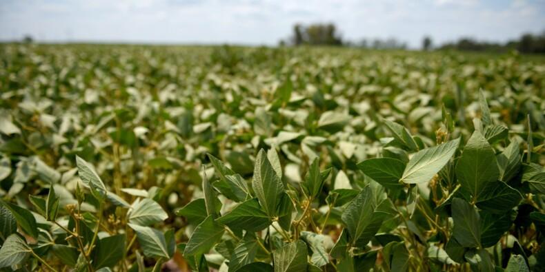 """Déforestation: Greenpeace dénonce """"l'addiction"""" européenne au soja OGM brésilien"""