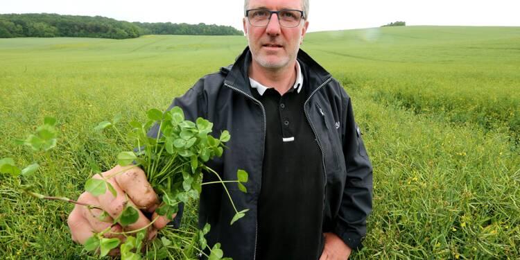 """Agriculture de conservation: quand le """"sans-labour"""" gagne du terrain"""