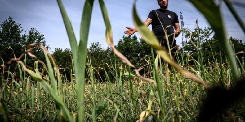 En proie à la sécheresse, les agriculteurs auvergnats implorent le ciel