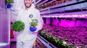 Les fermes verticales Jungle font pousser des légumes sans pesticides