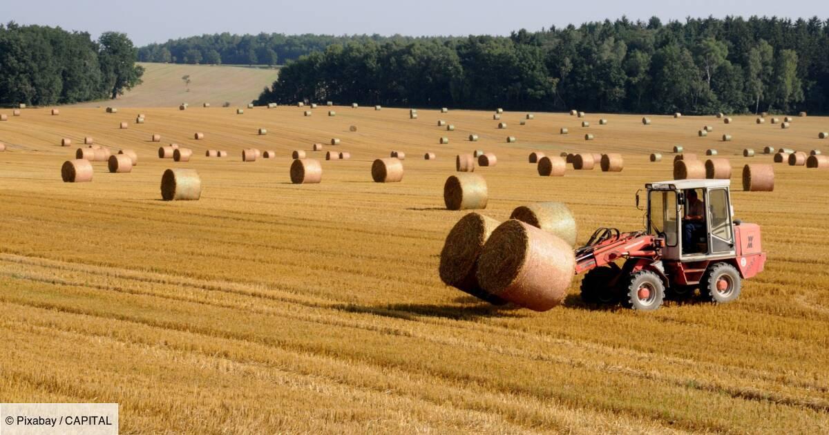 Retraite : le minimum de pension des exploitants agricoles revalorisé en novembre