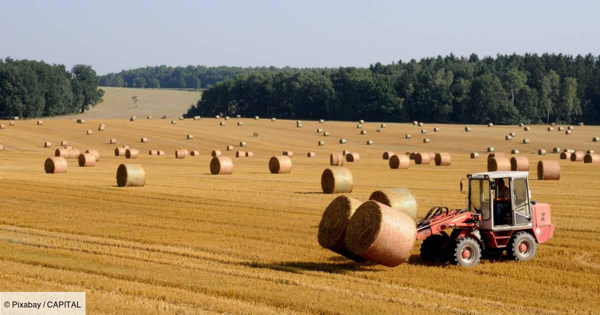 Retraite agricole : bientôt un nouveau dispositif pour améliorer la pension des salariés