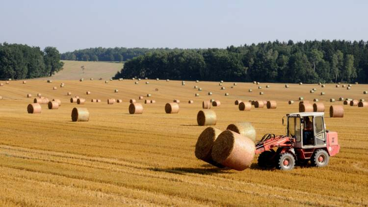 """Suicides, faillites… l'agriculture française """"sur l'échafaud de la mondialisation"""""""