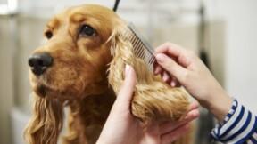 Toiletteur pour chiens : formation et compétences