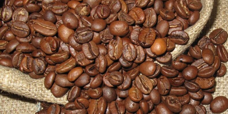 Colombie : chute vertigineuse des exportations de café