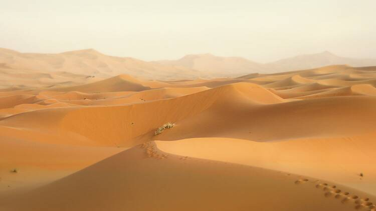 """Maroc : le Front Polisario du Sahara occidental dénonce un """"pillage pour financer la politique d'annexion"""""""