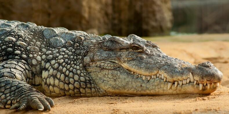 LVMH et Hermès achètent des fermes à crocodiles à tour de bras en Australie