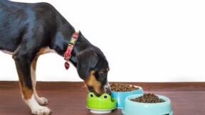 Cet entrepreneur nourrit vos chats et chiens avec des insectes