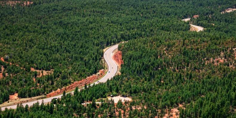 Etats-Unis : plus de 5.000 personnes réunies pour une fête illégale en forêt
