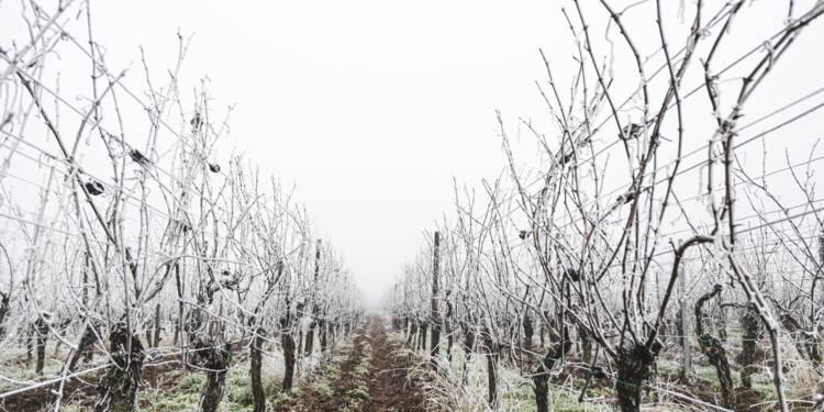 Un milliard d'euros d'aides pour les agriculteurs victimes du gel
