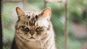 Un chat capturé près d'une prison pour avoir transporté de la drogue pour des détenus