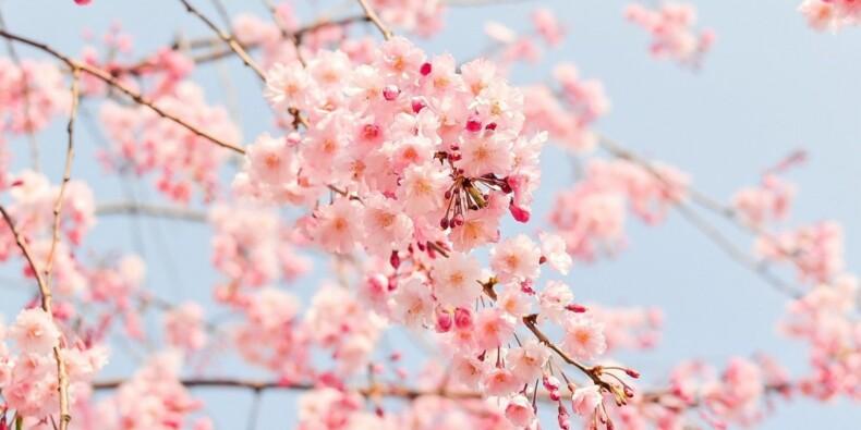 Comment est votre mois d'avril : plutôt hiémal ou vernal ?