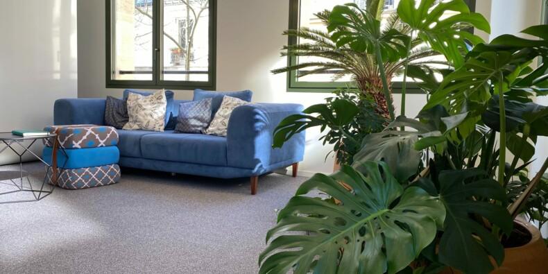 Des croquettes aux criquets, des plantes en pot pour les bureaux...les start-up à suivre
