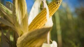 Blé, maïs et soja continuent leur fulgurante ascension