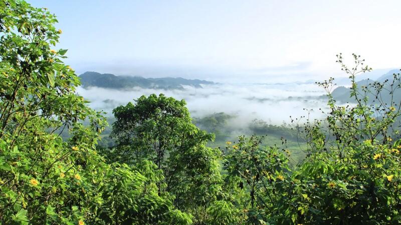 Brésil : la quasi-totalité de la déforestation en Amazonie est illégale