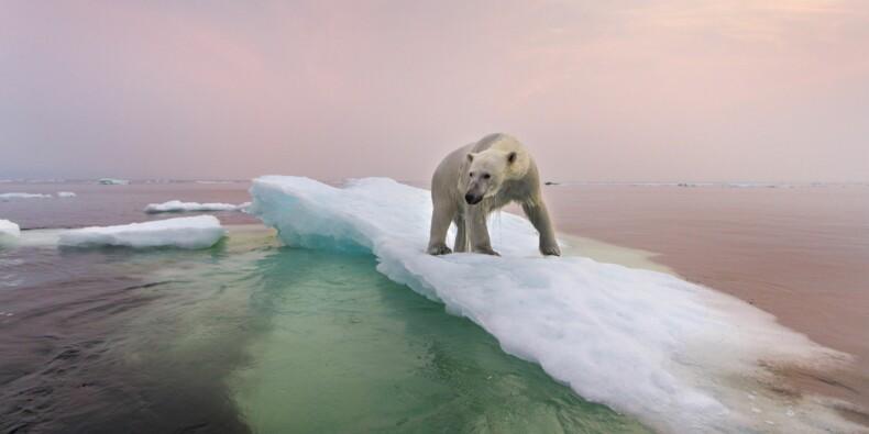 Réchauffement climatique : l'ONU et l'Imperial College de Londres tirent le signal d'alarme !