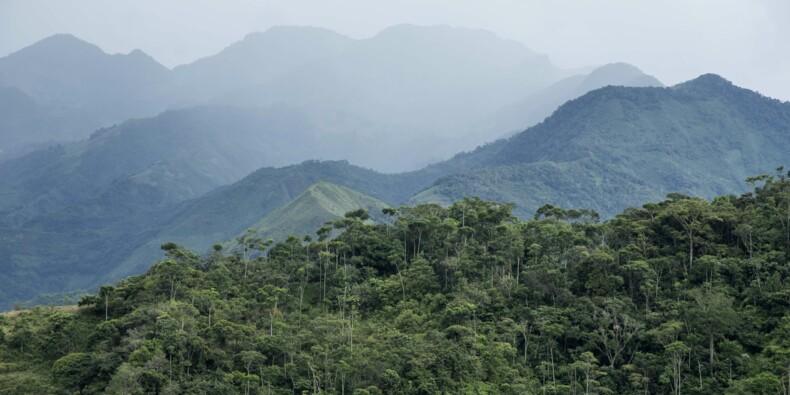 Déforestation : la Colombie a perdu l'équivalent de sa capitale en forêt