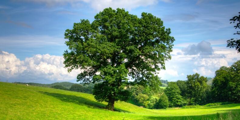"""Bois : face à l'exode massif de nos chênes vers la Chine, la France veut lutter contre les """"traders"""""""