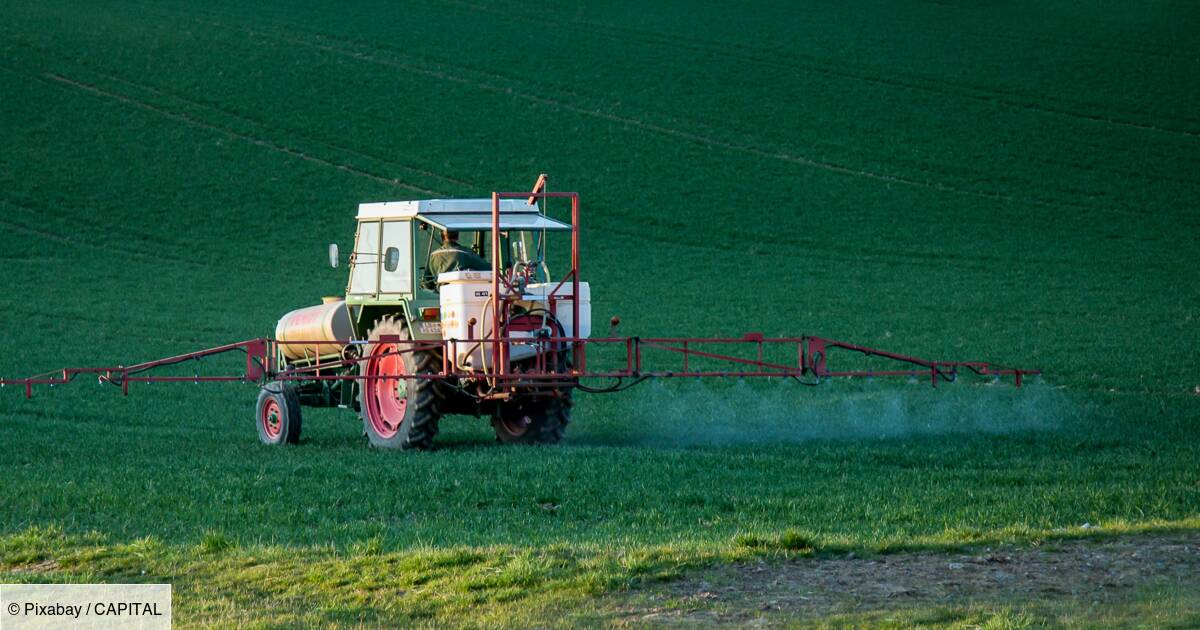 Glyphosate (Roundup) : Bayer (Monsanto) passe une lourde provision face au risque judiciaire