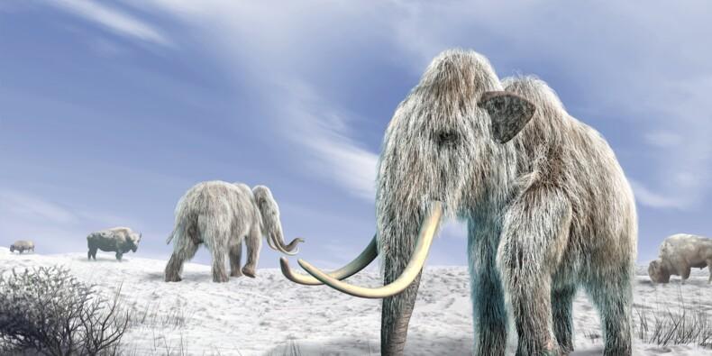 Des scientifiques récoltent un petit pactole pour ressusciter une vieille espèce de mammouth