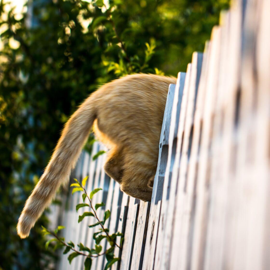 Kurios: Warum streckt deine Katze dir so gerne ihren Popo entgegen?