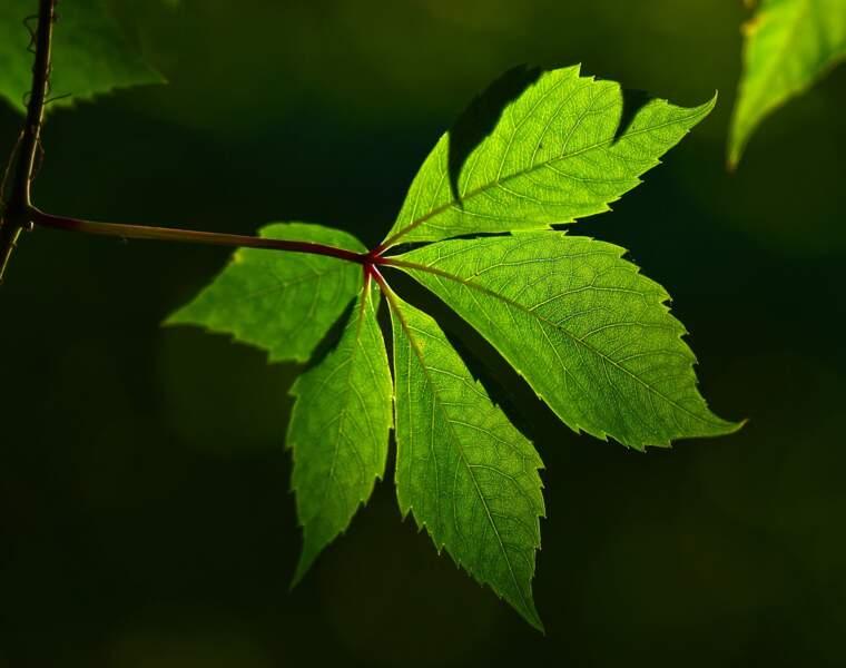 Les plantes détecteront les matières dangereuses