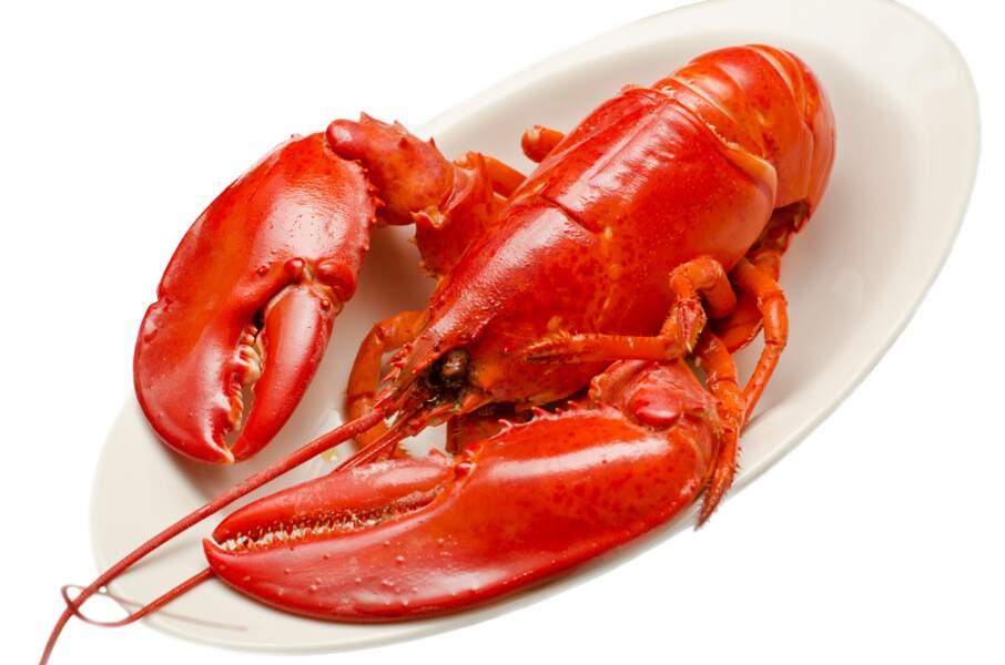 Le homard américian