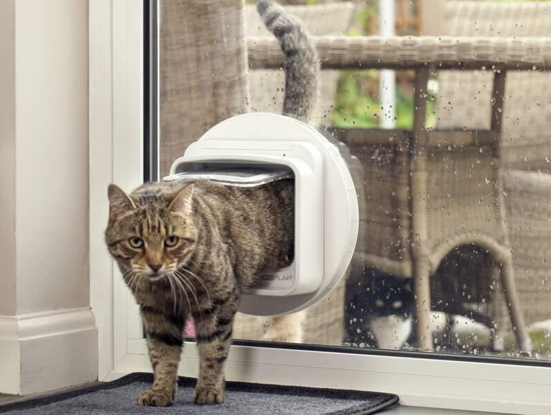 SureFlap, la chatière électronique vigile intelligente
