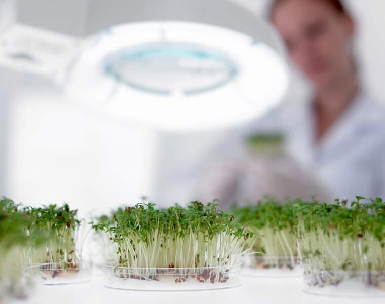 La Food Tech décolle en France, découvrez certaines pépites prometteuses